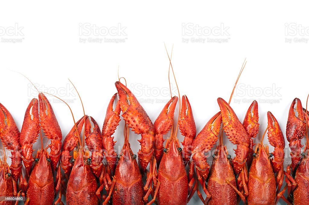 Many red crayfish stock photo
