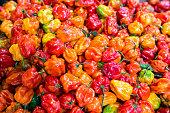 Many red yellow orange habanero peppers background