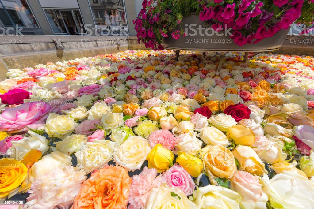 Many roses in a public fountain stock photo