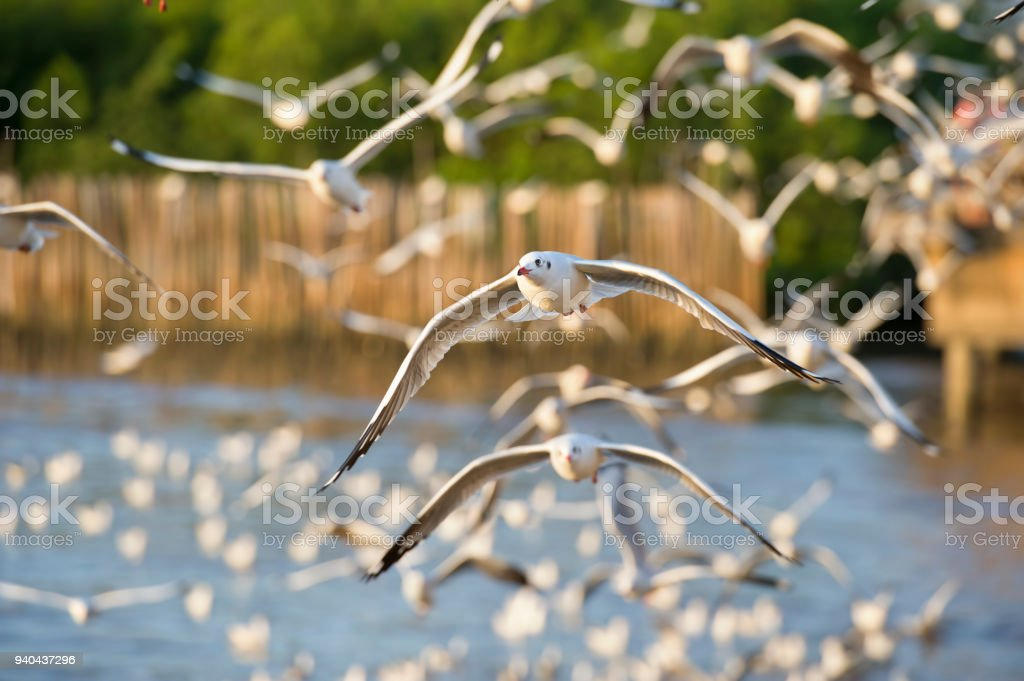 many seagull flying in sky stock photo