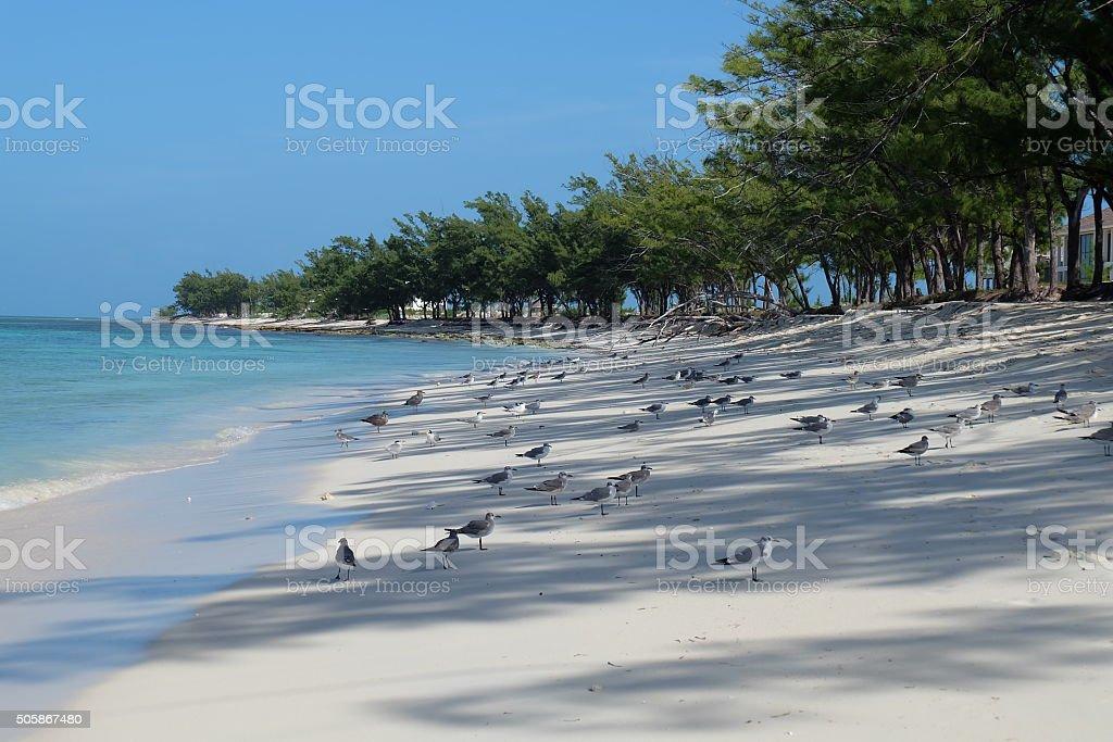 Many seagulls stock photo