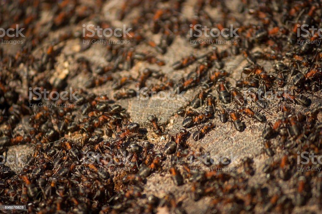 many small ants stock photo