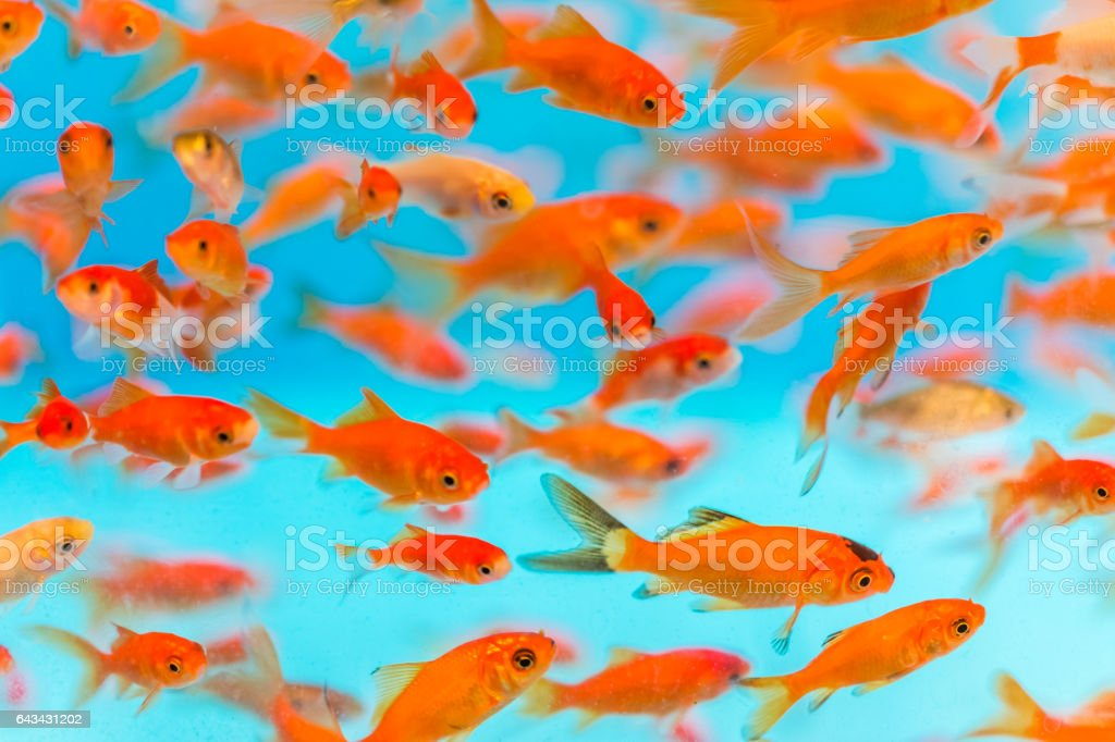 Muitos pequenos peixinho nadando no aquário - foto de acervo