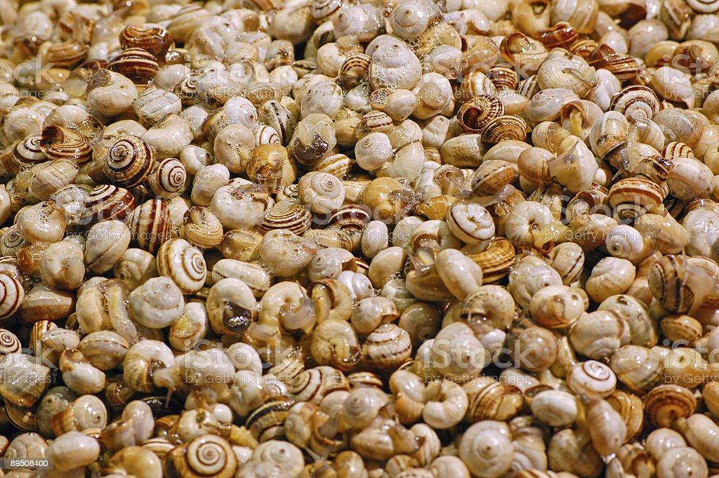 Nombreux des escargots photo libre de droits