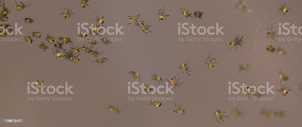 Many spiders royalty-free stock photo