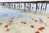 Many Starfish in the Water close to a Pier. Phu Quock Island, Vietnam.