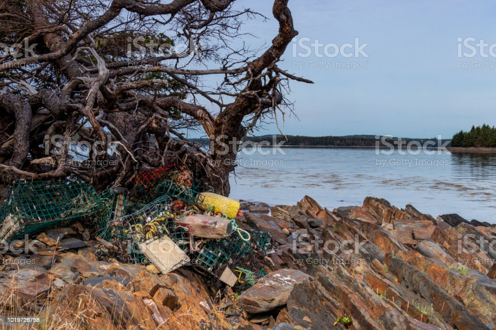 Many storm damaged lobster traps under tree roots on a rocky shore line. stock photo