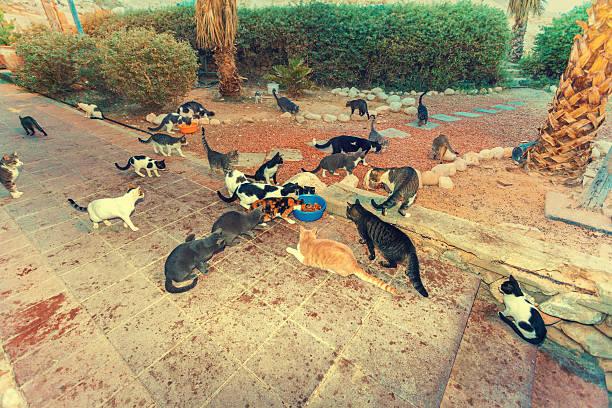 Many stray cats outdoor in park picture id585493774?b=1&k=6&m=585493774&s=612x612&w=0&h=ga9fehomqk1fnhofydnosaklilokcpmtacvcxf68rps=