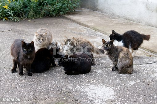 Many stray cats sit against the wall on the asphalt