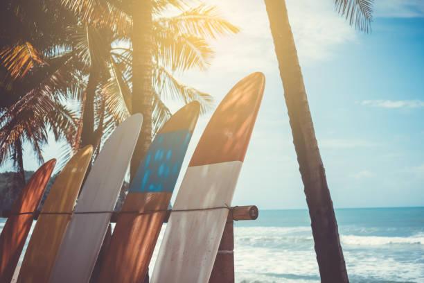 muchas tablas de surf al lado de cocoteros en la playa de verano con fondo de cielo azul y luz de sol. - surf fotografías e imágenes de stock