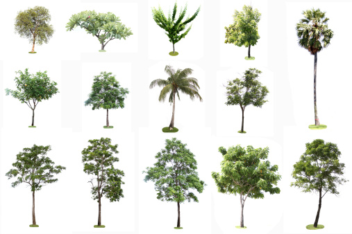 Many Tropical tree on a white background.