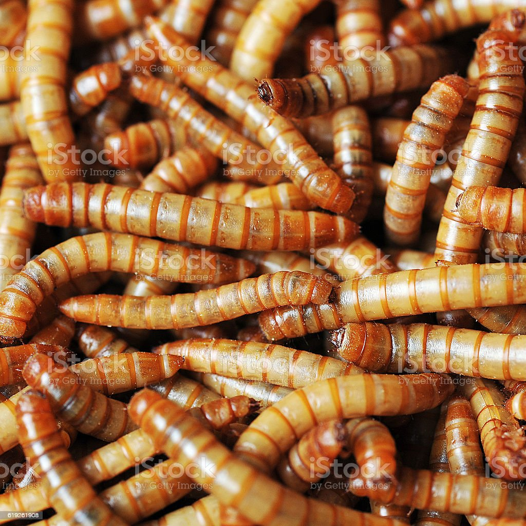 many ugly worms stock photo