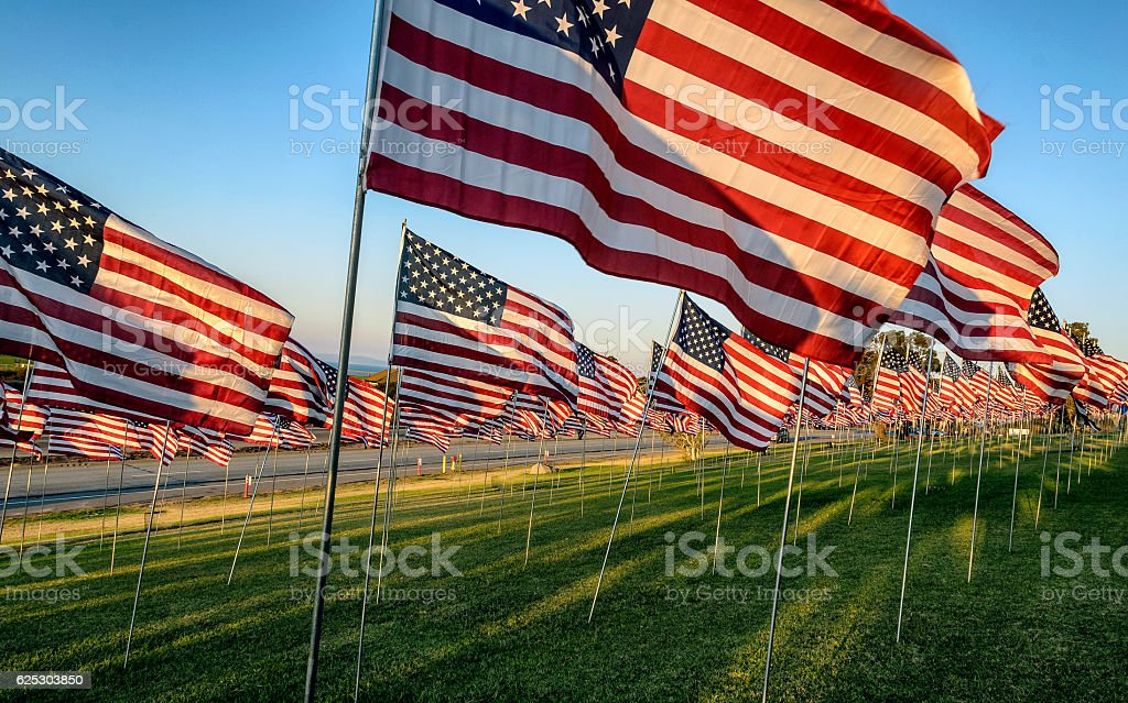Many US American flags on poles with blue sky background stock photo