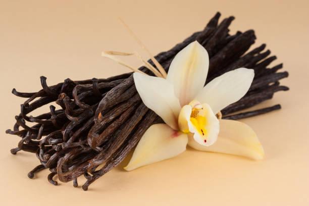 beaucoup des gousses de vanille - vanille photos et images de collection