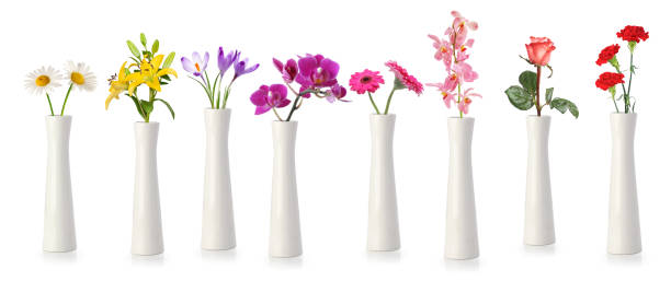 Many vases and flowers stock photo