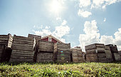 Many vintage apple crates at an orchard.