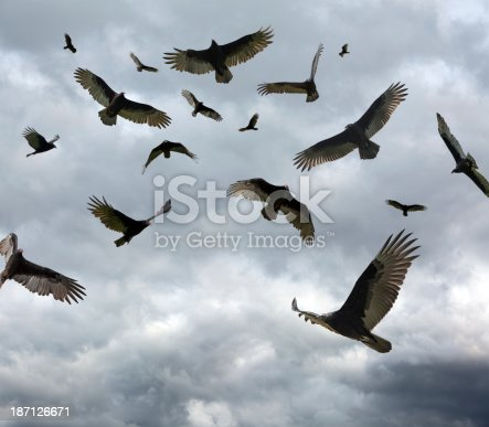 Large flock of vultures circling in the sky. with copy space.