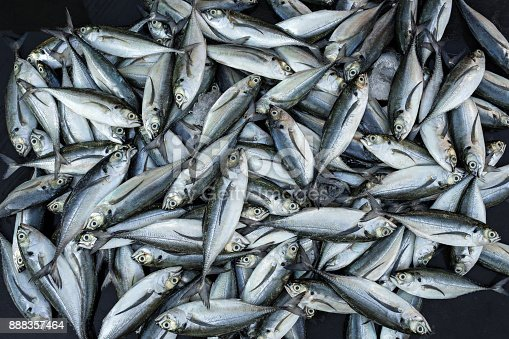 istock Many whole fresh fish 888357464