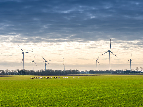 Wind turbines, renewable energy on a green field, spring day. Wind farm in the Netherlands. Flock of sheep the field.