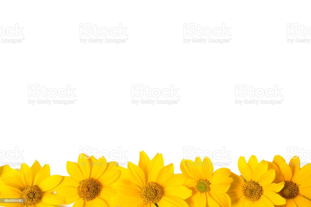 Many Yellow Flowers Isolated On White Background Closeup Photo Of