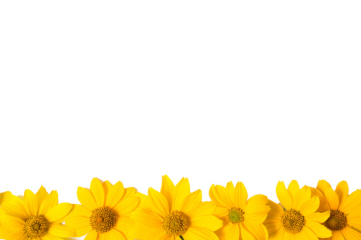 Many Yellow Flowers Isolated On White Background Closeup ...