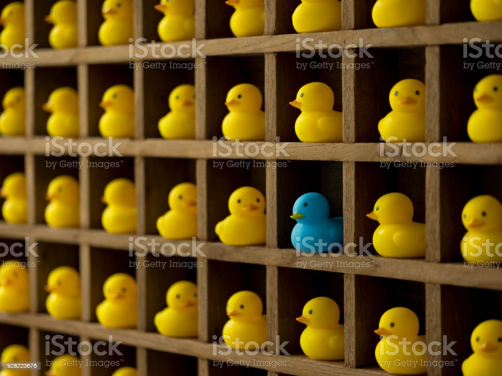 Many yellow rubber ducks in pigeon hole compartments with one different blue duck. stock photo