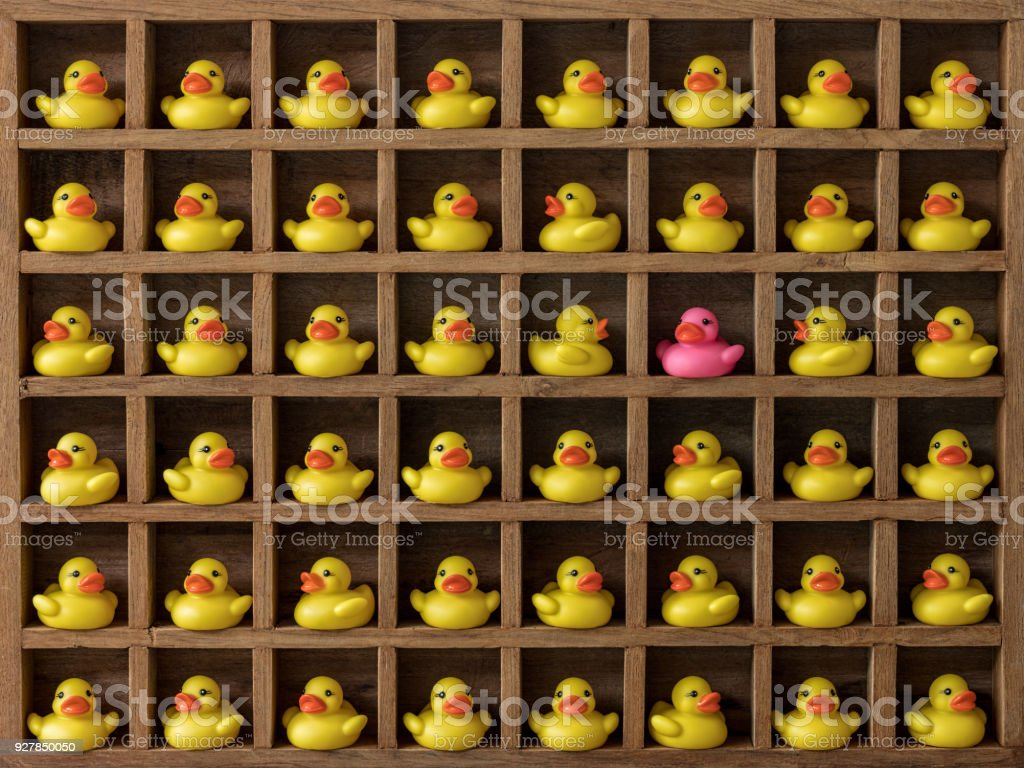 Many yellow rubber ducks in pigeon hole compartments with one different pink duck. stock photo
