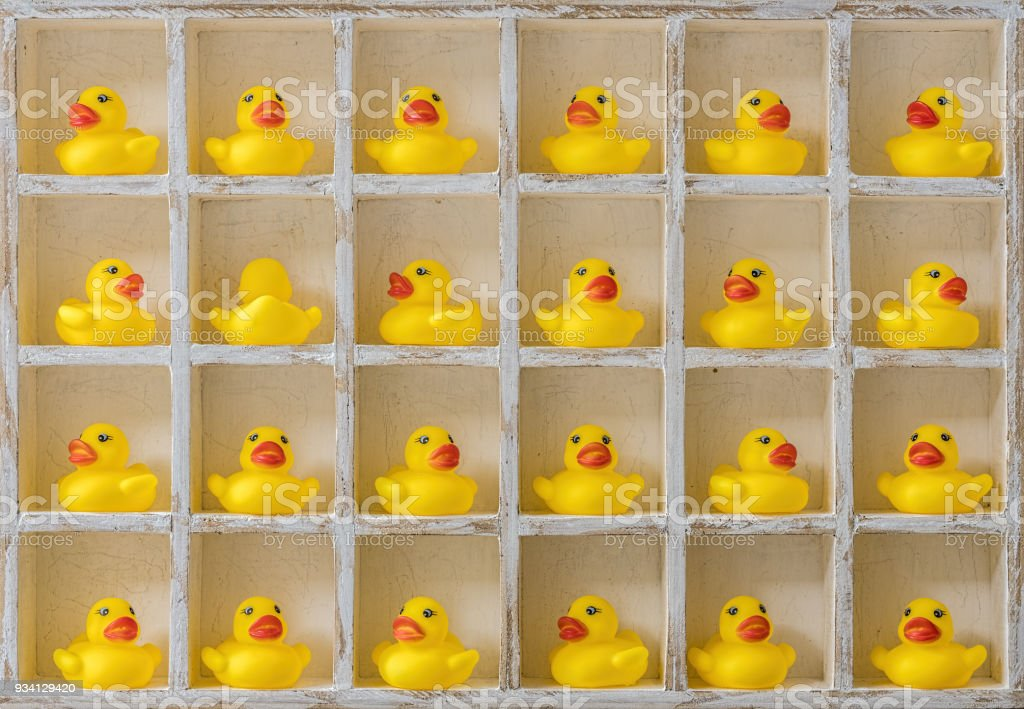 Many yellow rubber ducks in wooden pigeon hole compartments facing forwards with one yellow rubber duck in one of the compartments facing backwards. stock photo