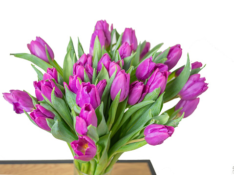 selective focus. red tulips in a vase isolated on white background. Spring composition. Delicate purple tulips on white background top view space for text border. copy space