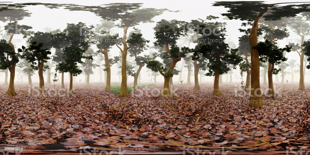 HDRI map, spherical environment panorama background, misty forest light source rendering (3d equirectangular rendering) stock photo