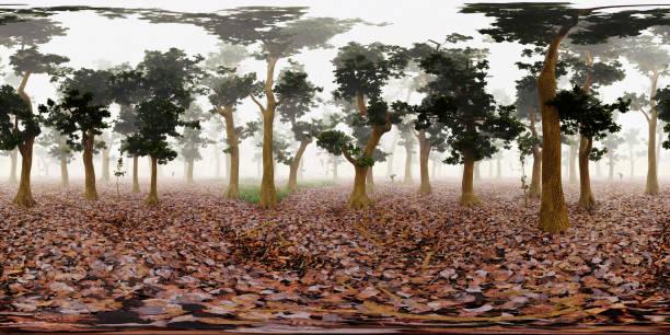 Carte HDRI, fond de panorama sphérique environnement, source de lumière de forêt brumeuse rendering (rendu 3d d'équirectangulaire) - Photo