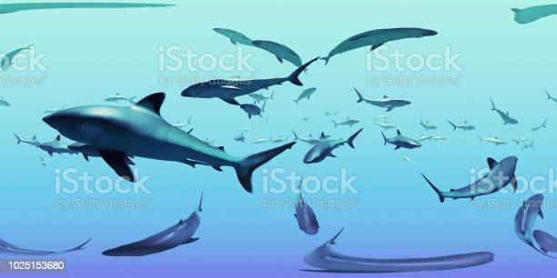 Map spherical environment panorama nature background group of sharks picture id1025153680?b=1&k=6&m=1025153680&s=612x612&h=5gbkf1t6nys7n9htj1bzsltmtbmuh7pcuevfhez 2ca=