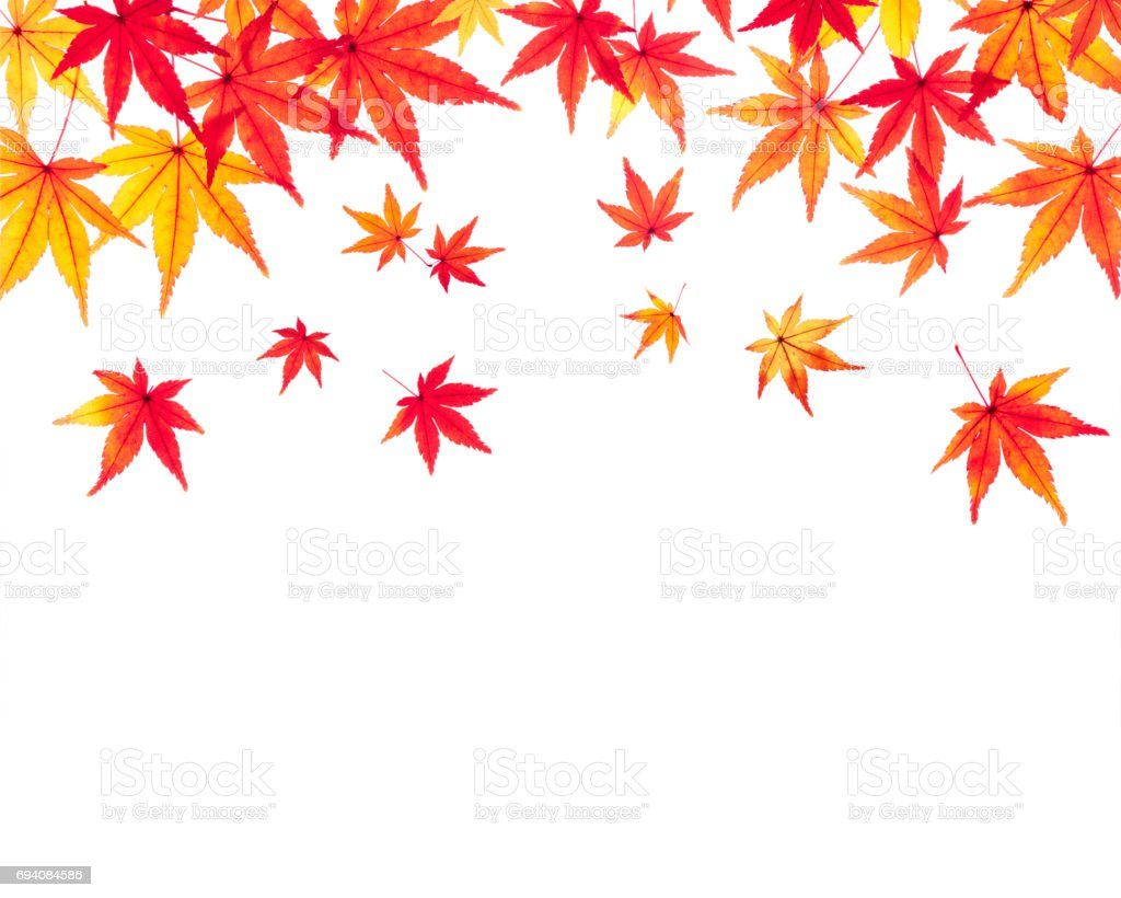 Maple Autumn leaves Autumn image stock photo