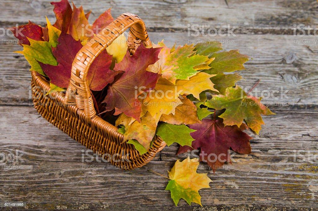 Maple autumn leaves in a basket photo libre de droits