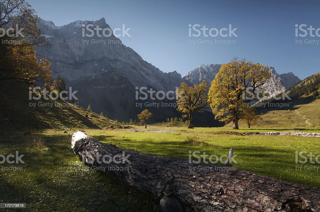 Ahorn Boden 11 royalty-free stock photo