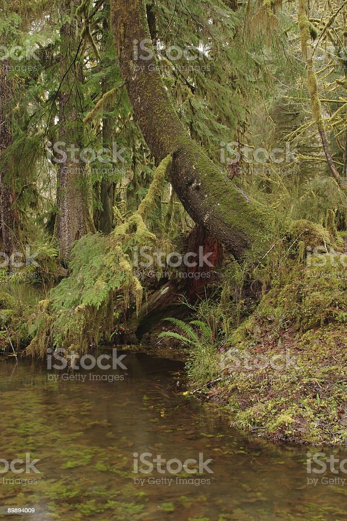 Maple Glade Trail royalty-free stock photo