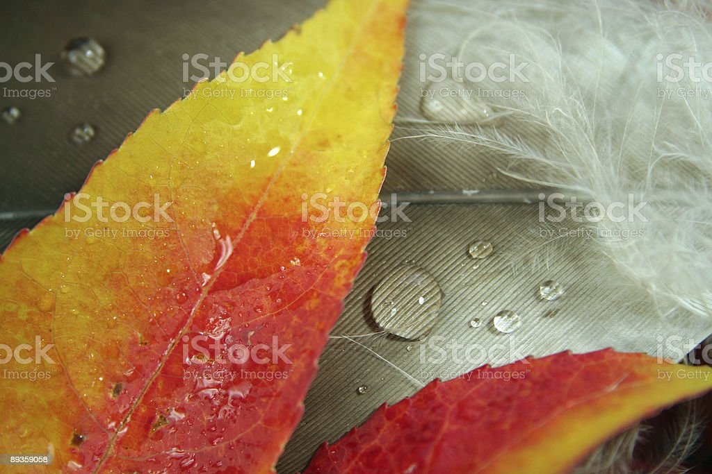 maple leaf and eagle feather royalty free stockfoto