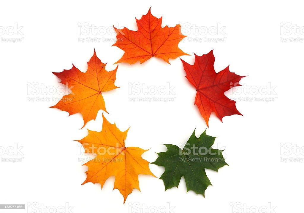 Maple leaf background royalty-free stock photo