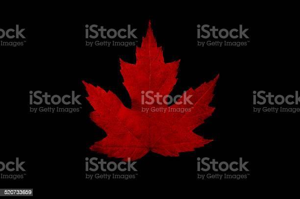 Photo of Maple Leaf black background