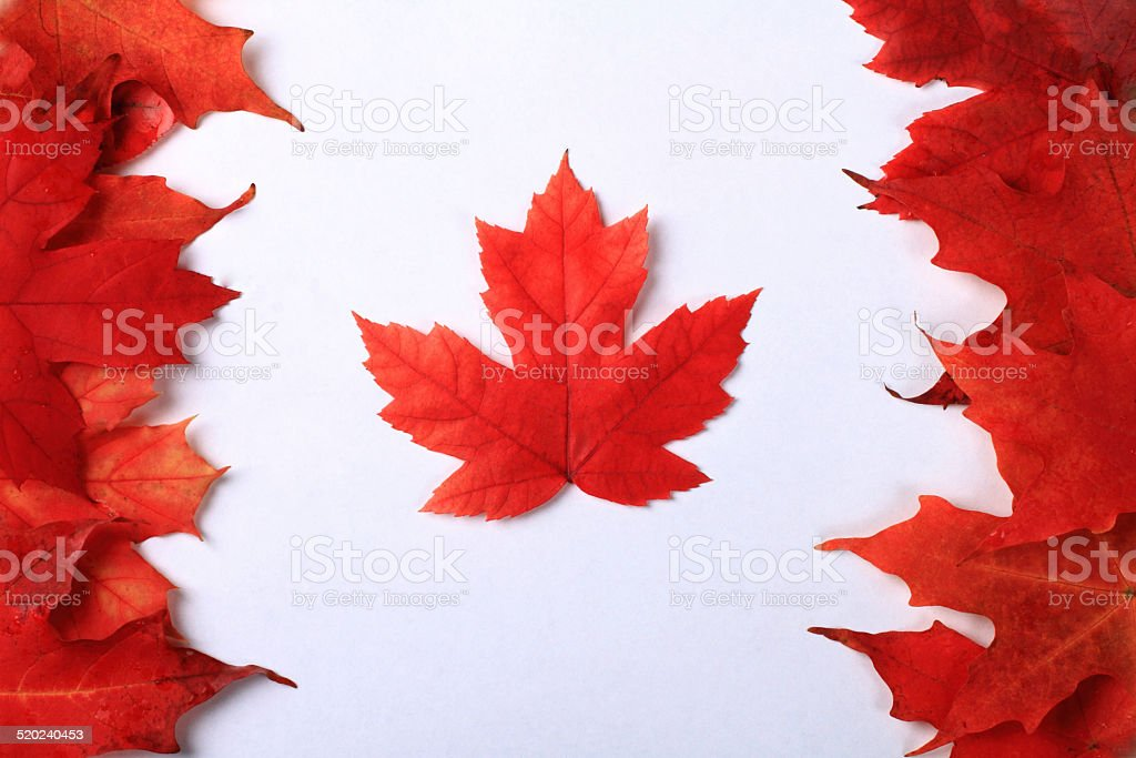 Maple Leaf Canada Flag stock photo