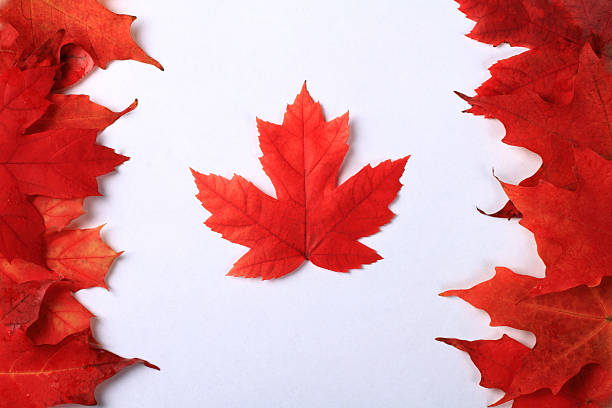 maple leaf canada flag - maple leaf stock pictures, royalty-free photos & images