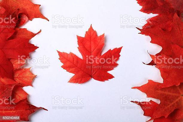 Photo of Maple Leaf Canada Flag