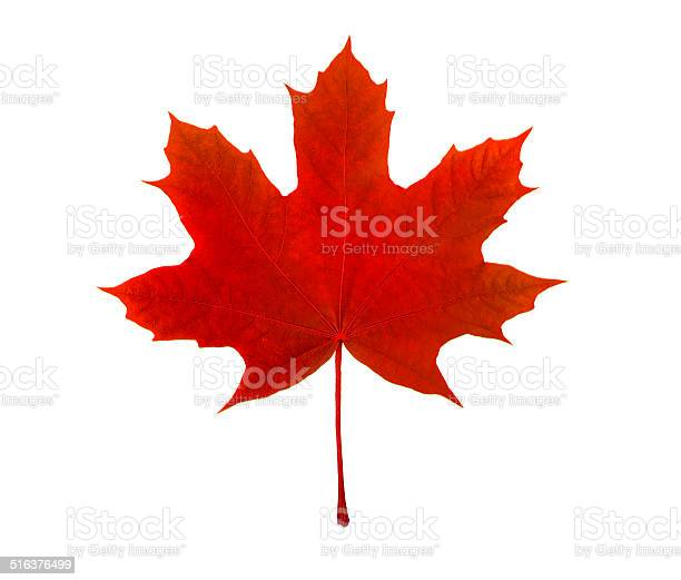 Photo of maple leaf, canadian symbol, on a white background