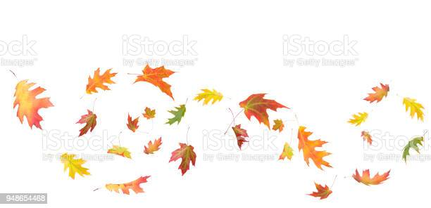 Photo of Maple leaf composition isolated on white