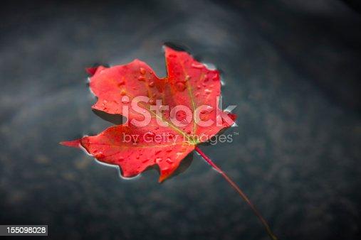 Close up of a fall leaf in a creek in autumn