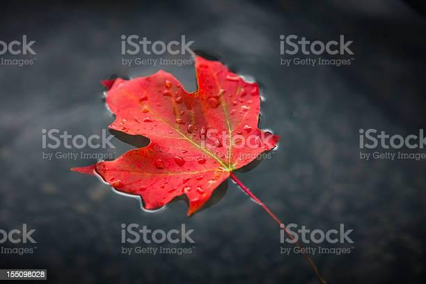 Photo of Maple leaf floating on fresh water