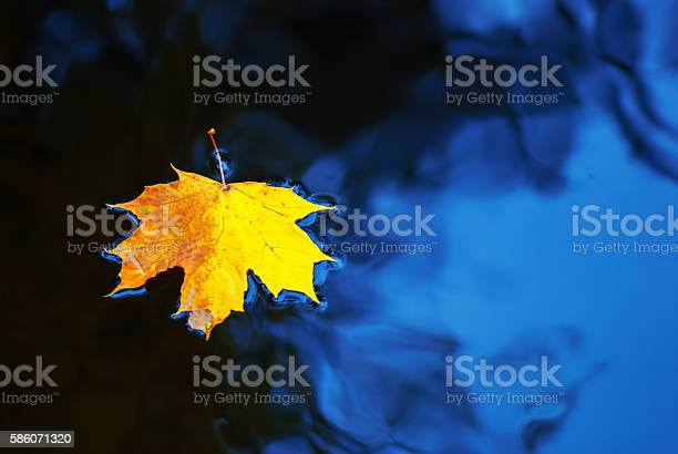 Photo of Maple leaf floating on water