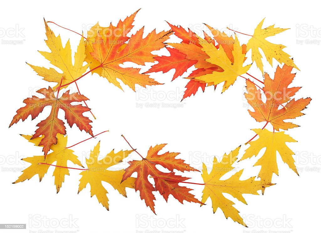Maple Leaf Frame Stock Photo & More Pictures of Autumn | iStock