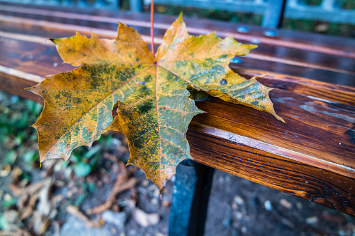 Wooden bench in the autumn park framed by bushes.