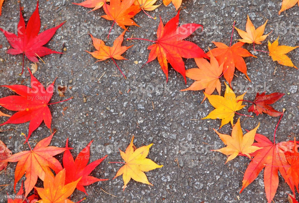 maple leaf in autumn on road royalty-free stock photo